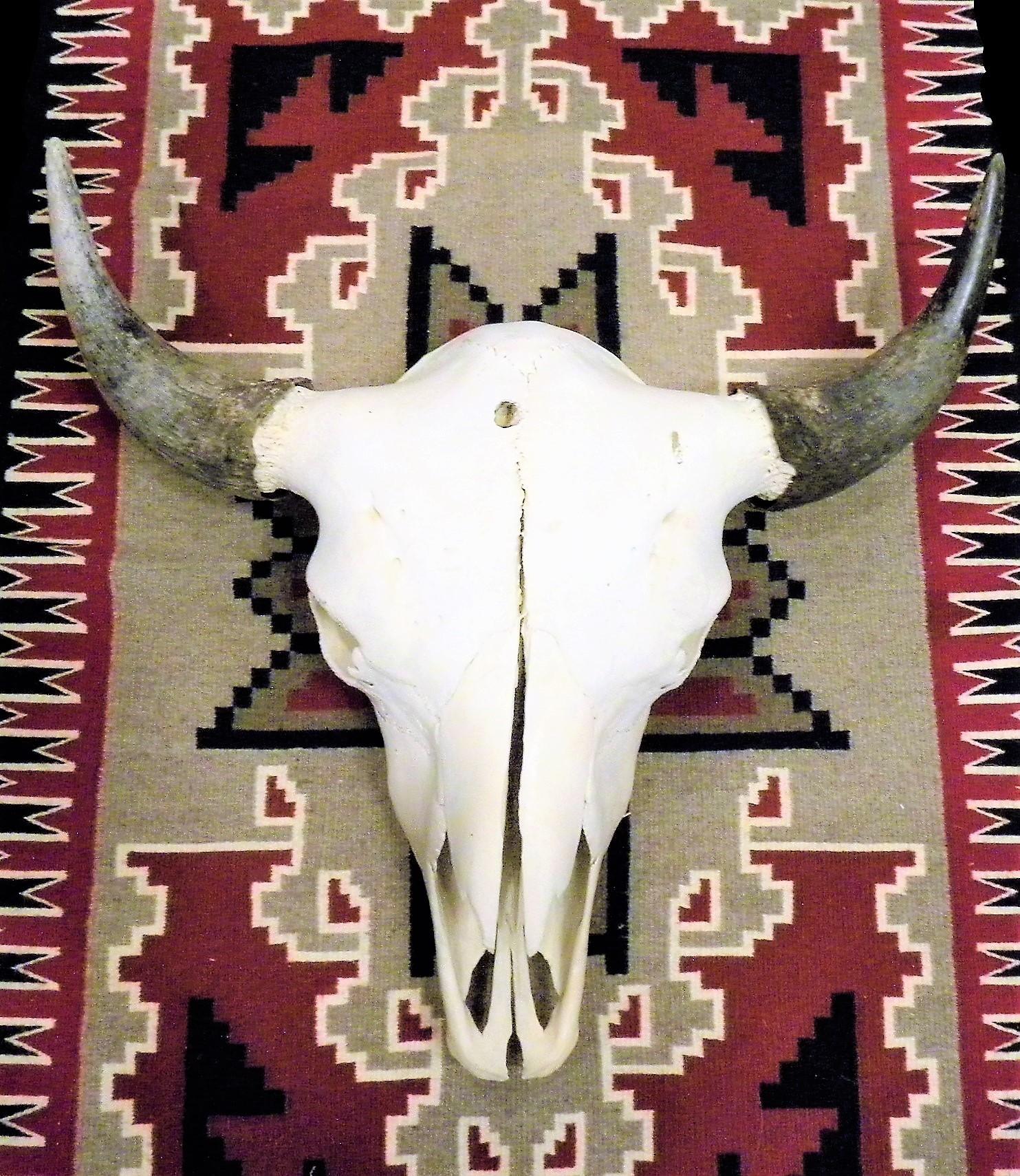 CS1- Cow Skull